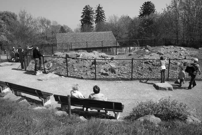 Bau einer neuen Murmeltieranlage. Das erste Gehege entstand 1948.